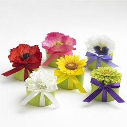 BloemBox Flower Seeds