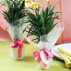 Mini Palm Plant Wedding Favors