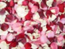Love Freeze Dried Rose Petals