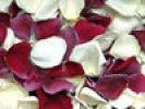 Romance Freeze Dried Rose Petals