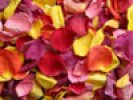 Tropical Freeze Dried Rose Petals