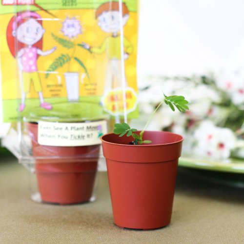 Tickle Me Plant Party Favor
