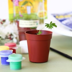 Tickle Me Plant Party Favor with Paint Set