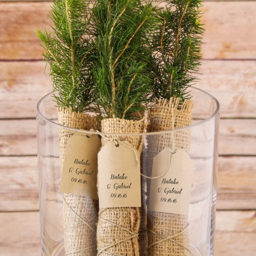 Evergreen Tree Seedling Favor with Personalized Tag