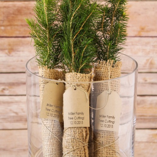 Personalized Party Evergreen Tree Seedling Favors